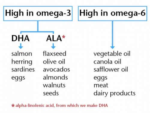 omega-3-oil-for-dogs-19994